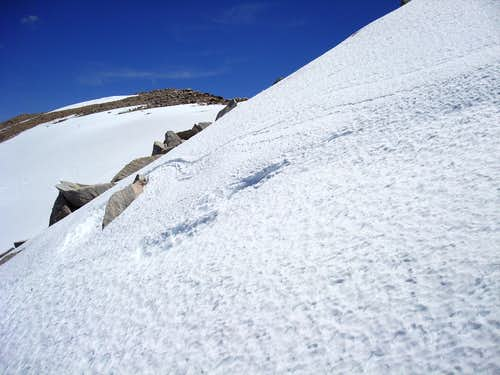San Gorgonio Springtime Climb