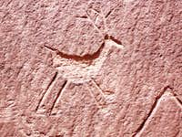 Ungulate Petroglyph, Canyon de Chelly