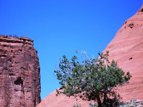 Lone tree, Canyon de Chelly
