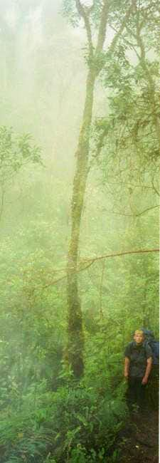 Thick and misty rainforest on...