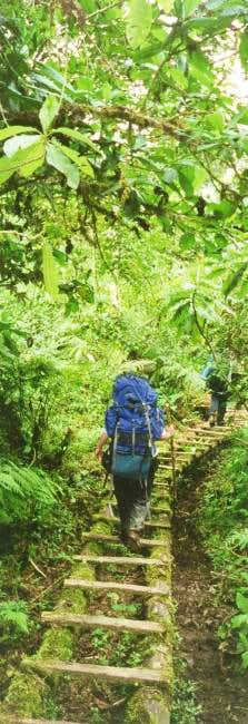 Tall rainforest trees on the...