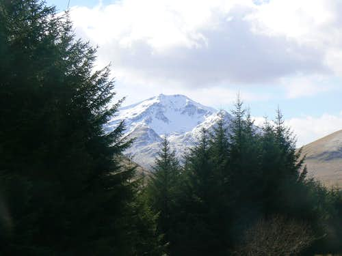 Ben Lui over the trees