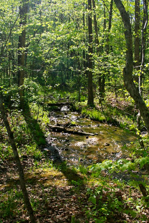 Unnamed Tributary of Bloom Creek
