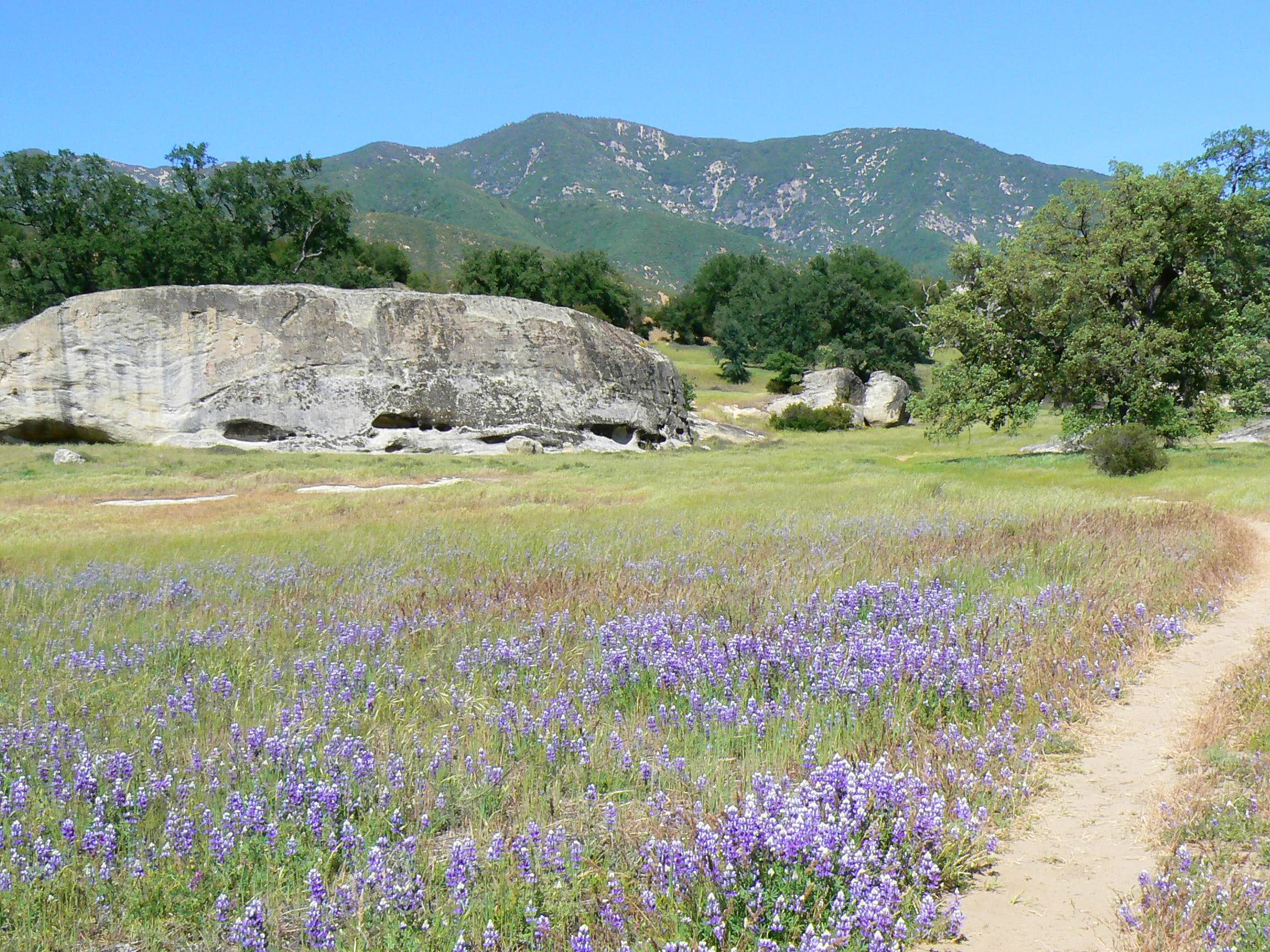 Springtime in the Santa Lucias: Junipero Serra Peak
