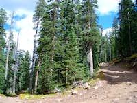 Hiking Trinchera Road