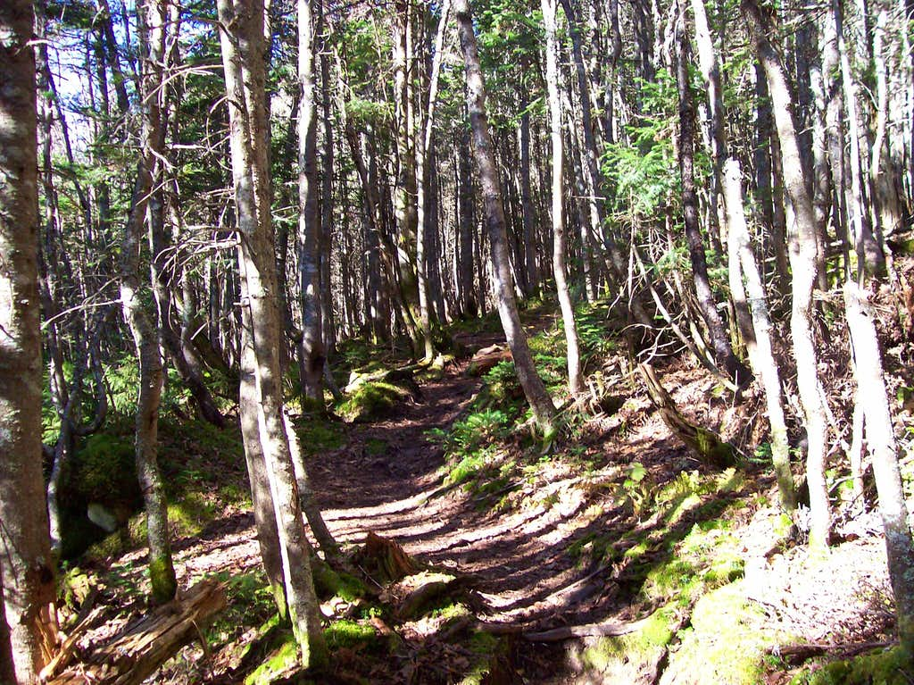 The beginning of the Mt. Tom spur trail