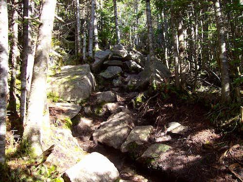 the rocky Mt. Tom trail
