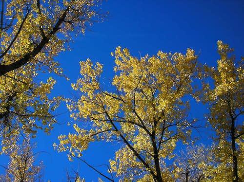Fall in Waterton Canyon