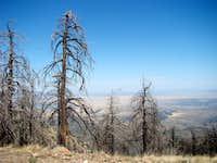 Fire Damaged Trees by Baldy Saddle