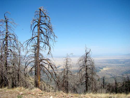 Fire Damaged Trees by Baldy Saddle