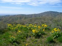 Foothill Wildflowers