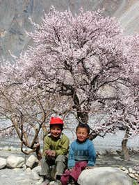 Spring Blossom in Baltistan and Hunza