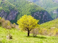 Spring in Rakitnica canyon
