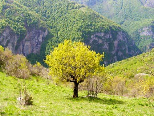 Spring in Rakitnica canyon