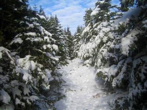 Signal Ridge trail