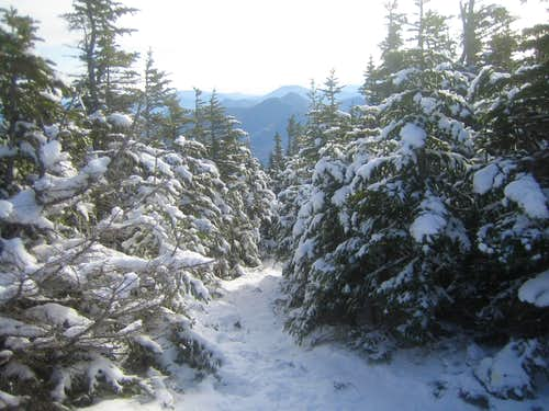looking back on the Signal Ridge trail