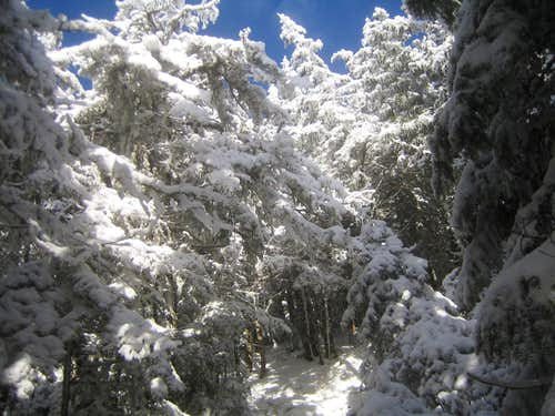 the trail in winter like conditions
