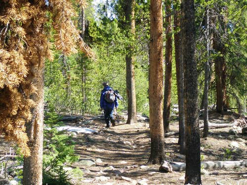 Yellowstone Creek Trail