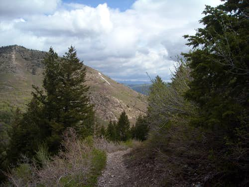 Trail up south side of Ogden Divide
