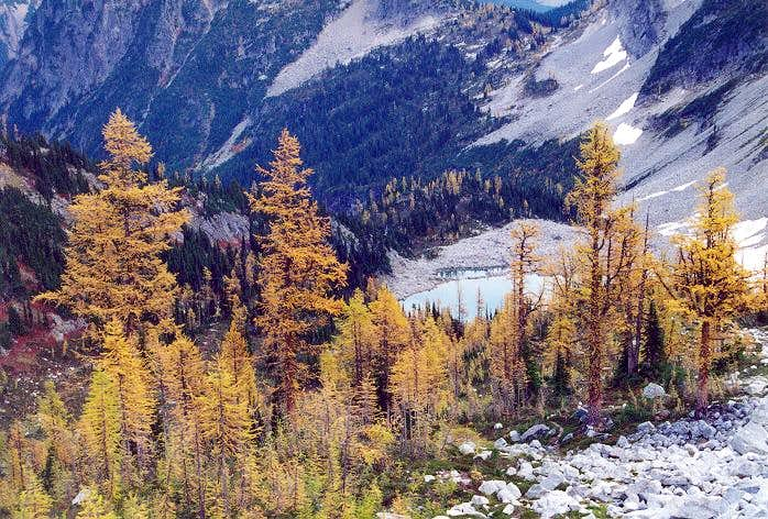 Larches in autumn. Is there a...