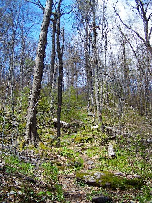 Balsam Lake Mtn Trail