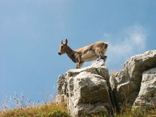 on the Dent d\'Oche (august...