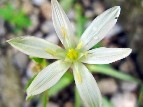 Beautifull flower...