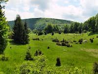 Zsidó-rét at the plateau of Bükk