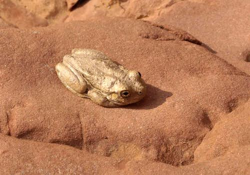 frog in Lean-To Canyon