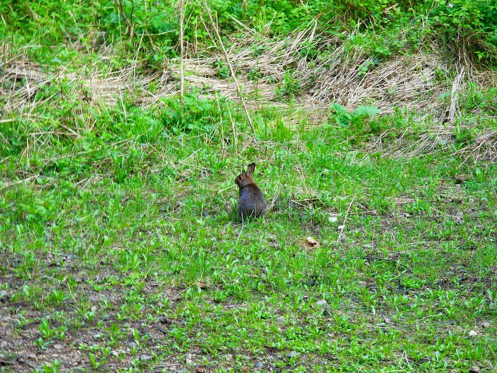 A wascally wabbit!!!