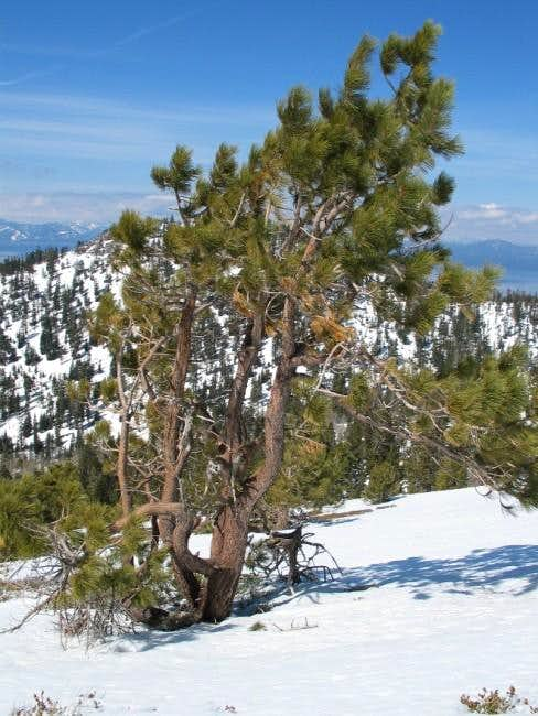 Near the summit of Snow...