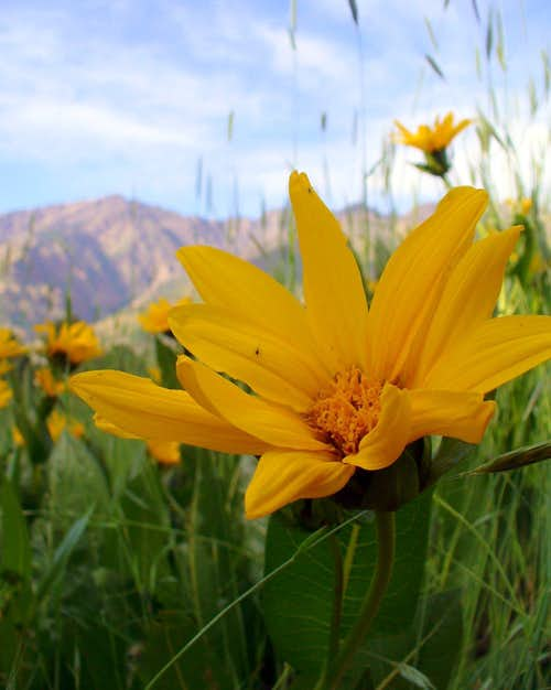 Mule Ears at the base of Olympus