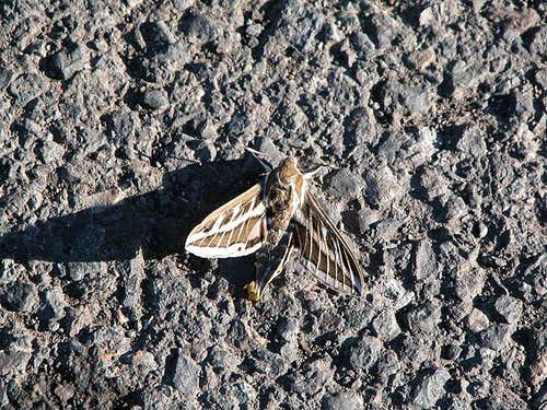 Butterfly trying to heat up...