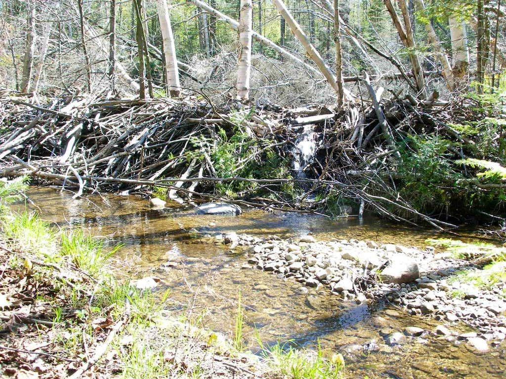 Beaver Dam - Wakely Mtn. Trail