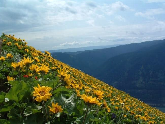 Wildflowers in spring (May...