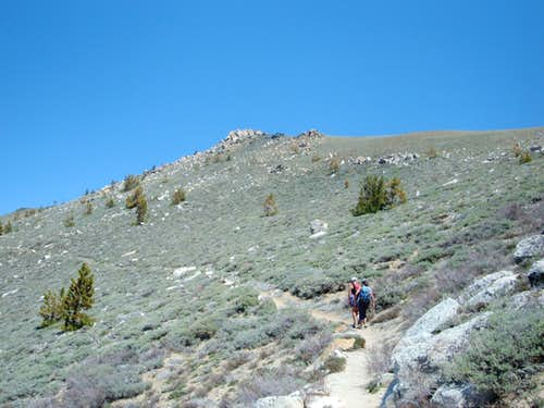 Coming up the TRT towards Snow Valley Peak