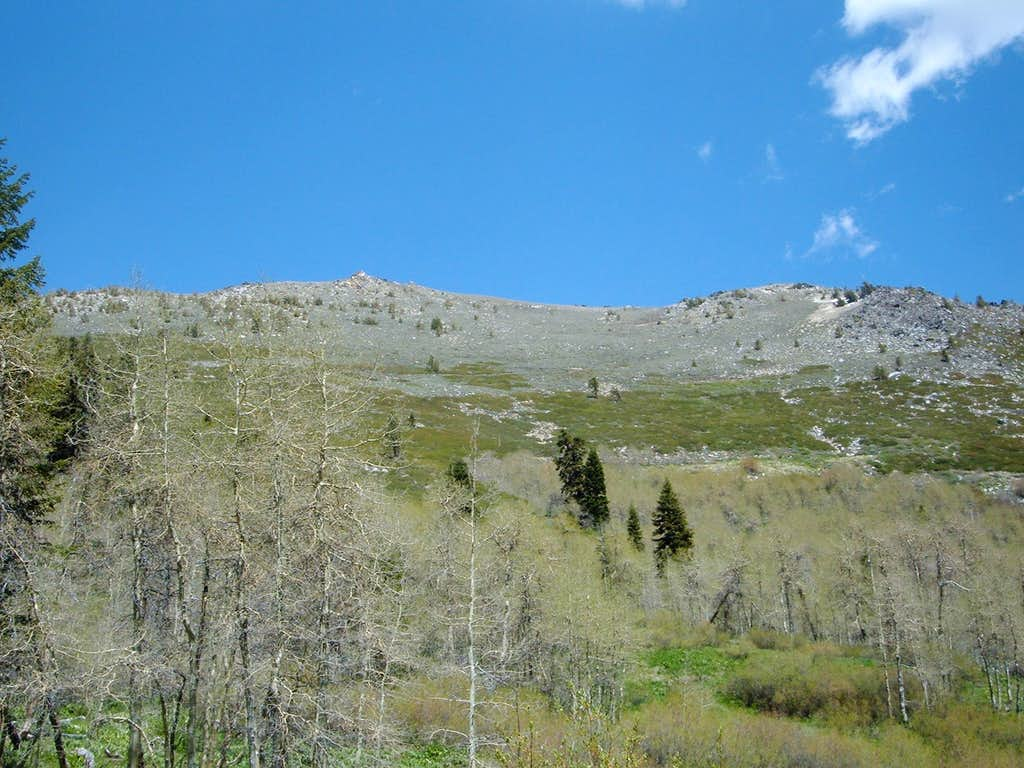 View up the slopes of Snow Valley Peak