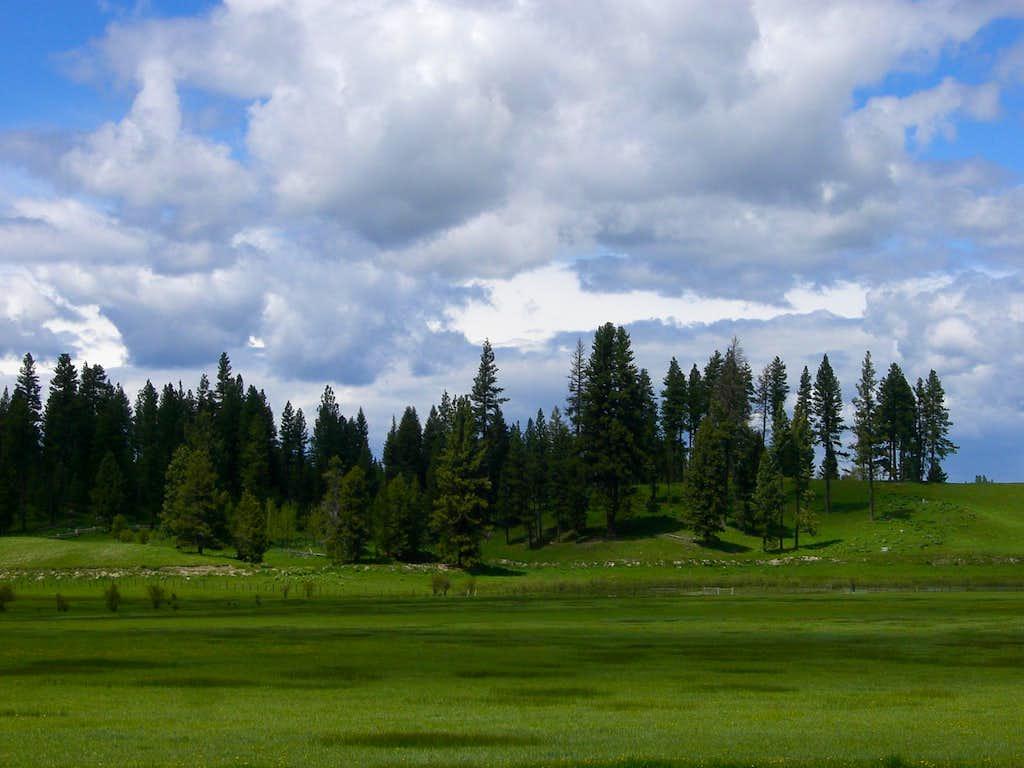 Cabarton Meadow