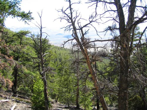 forest below borah