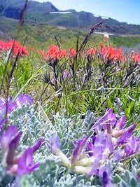 Lady-Slipper Milkvetch and Indian Paintbrush