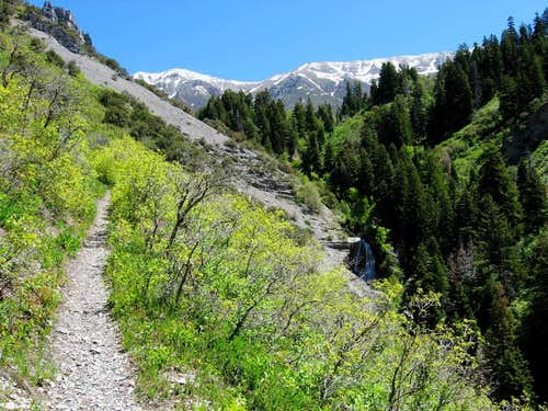 Grove Creek, A Timpanogos side hike.