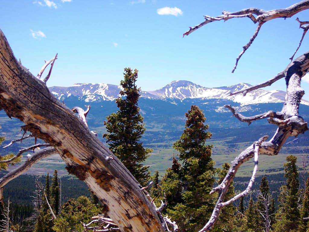 Buffalo Peaks through the Ghost Forest