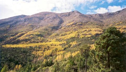 Aspens in color near the...