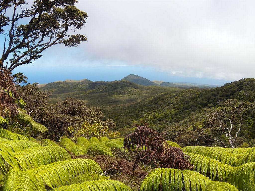 The view northwest