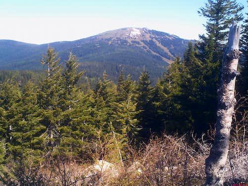 Bear Encounters on Mt. Spokane