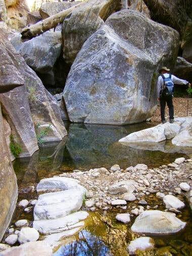 In Fern Canyon