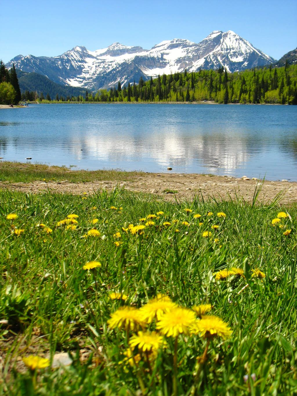 Springtime in American Fork Canyon