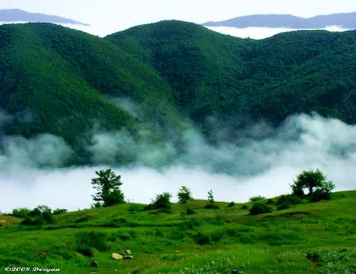 جنگل زیبای ابر
