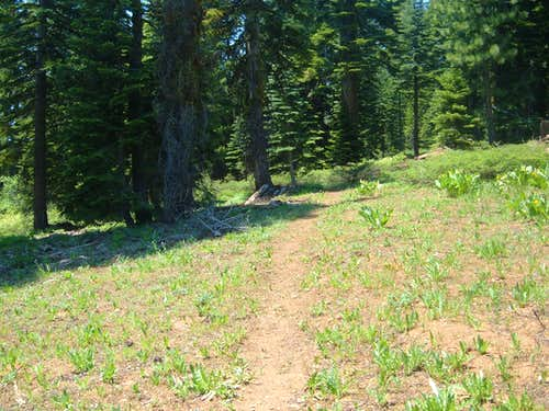 The quaint and simple trail to Haskell Peak