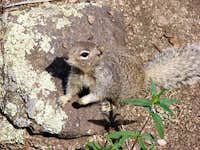 Sandia Mountain Wildlife